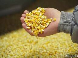 Yellow Corn FOB Brazil
