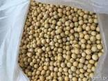Soybeans - photo 1